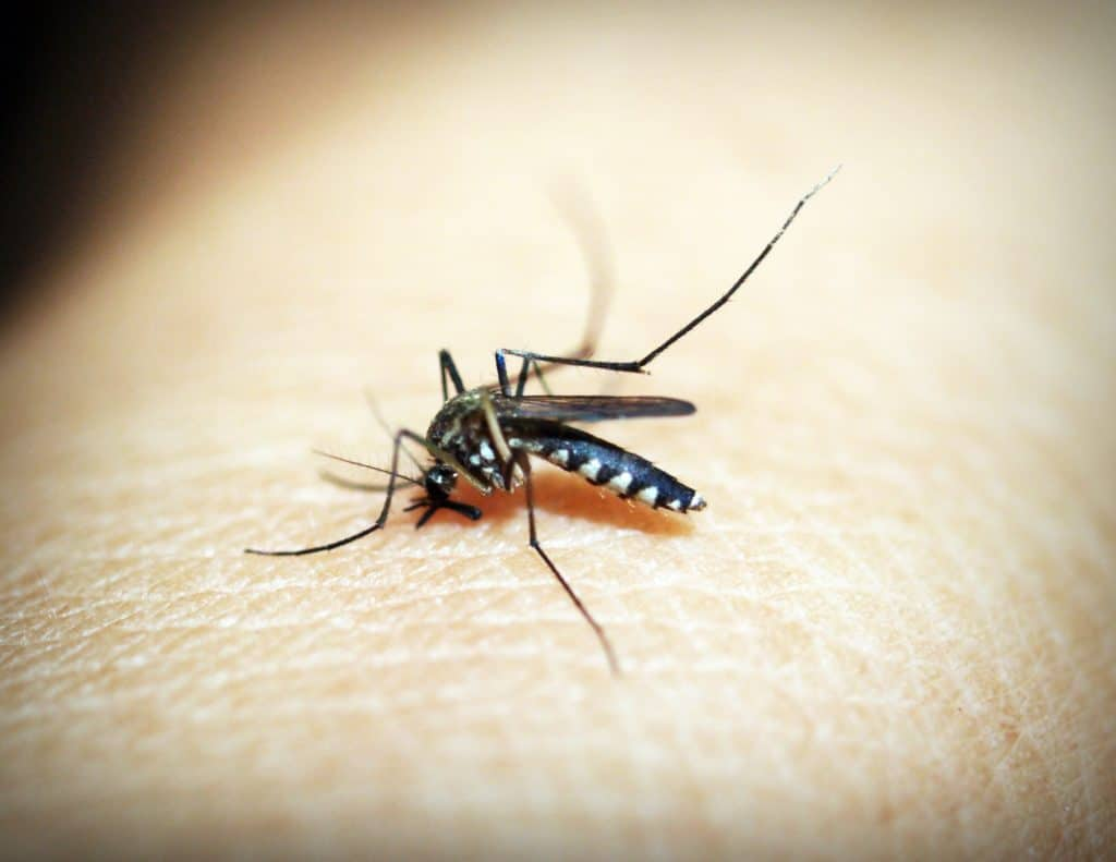 Mosquito Repellent Tricks and Remedies That Work