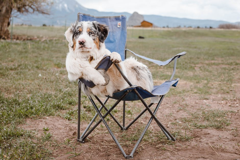 camping with dogs tips